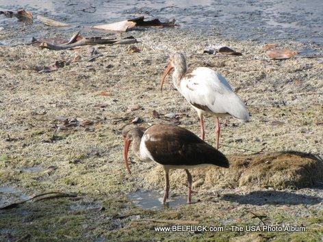 Birds Wildlife At Castaway Point Park Palm Bay Florida