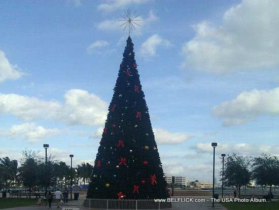A Christmas Tree in Downtown Miami Florida